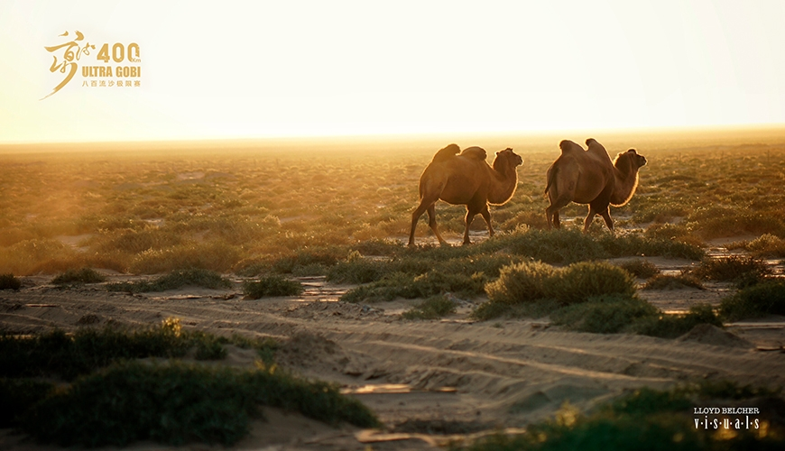 Gobi ultra 400 kameler